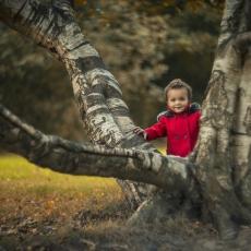 Olivia n' tree